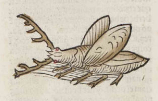 Image: Eight-legged flying beetle with antlers from Hortus Sanitatis, 1491. Baillieu Library Rare Books Collection